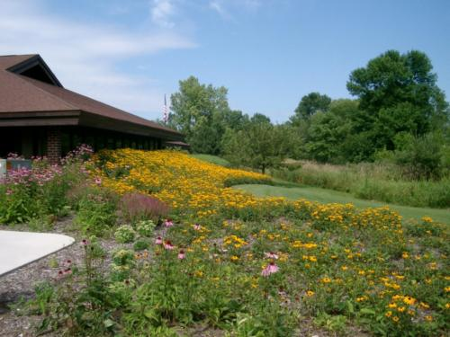 Perennial bed weeding and maintenenace