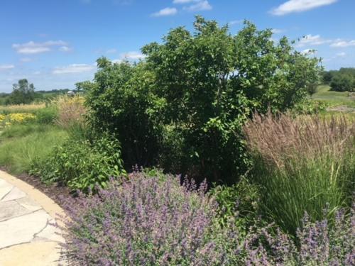 perennial entry garden