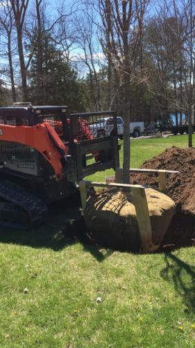 planting huge shagbark hickory