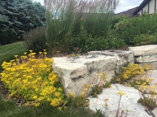 rock garden planting