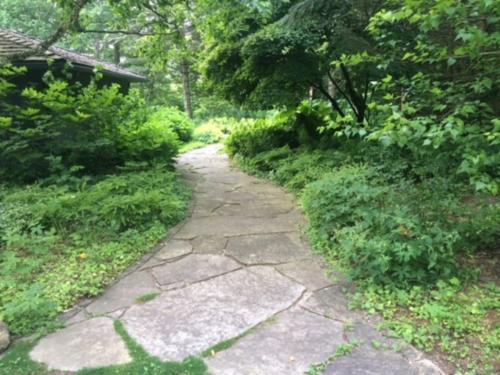 shade garden on limestone path